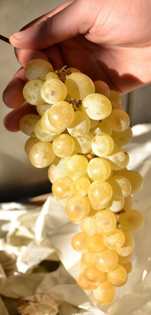 12-bely-h-vinogradin