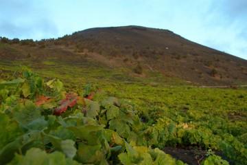 Vina-Kanarskih-ostrovov-Puteshestvie-v-istoriyu