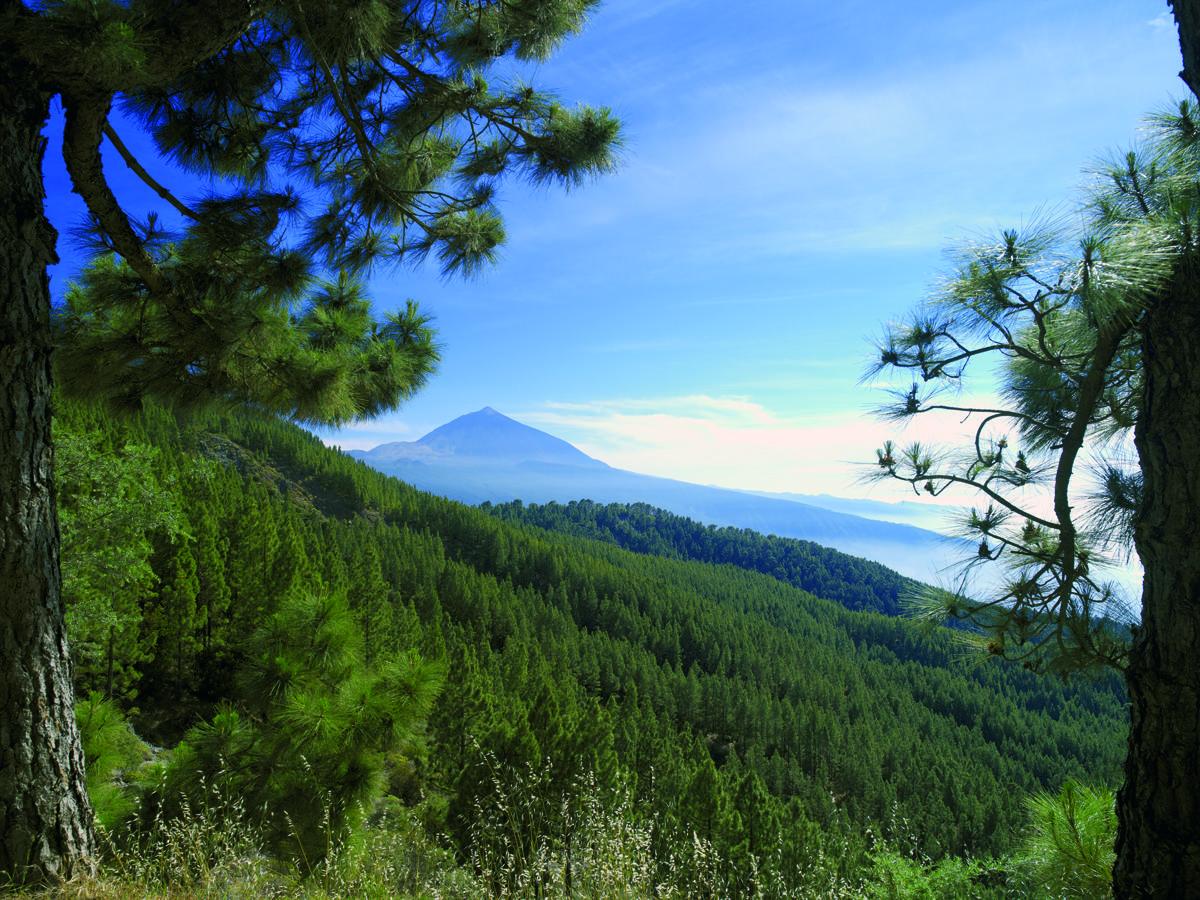Vulkan-Tejde-na-Tenerife