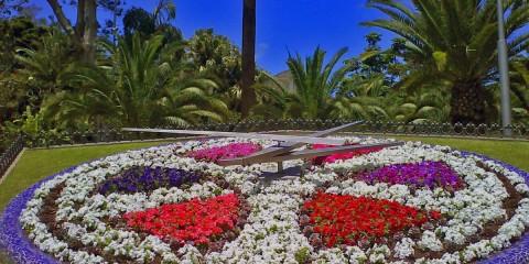 Kotory-j-chas-na-Tenerife