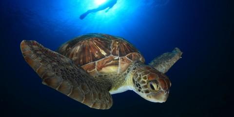 Aktivny-j-otdy-h-vodny-e-vidy-sporta-na-Tenerife.