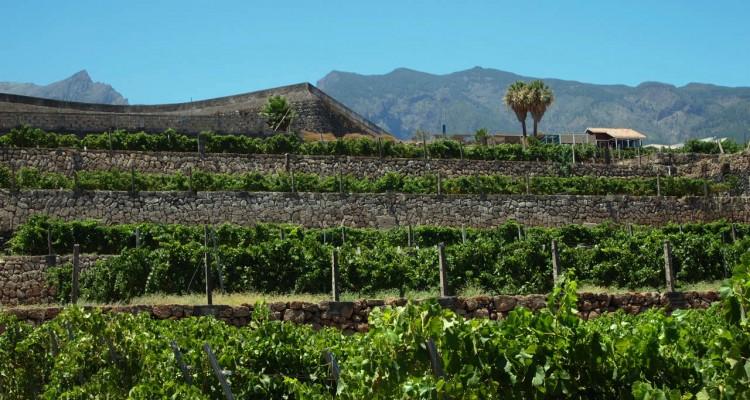 Vina-Tenerife.Vinodel-cheskie-rajony-yuga
